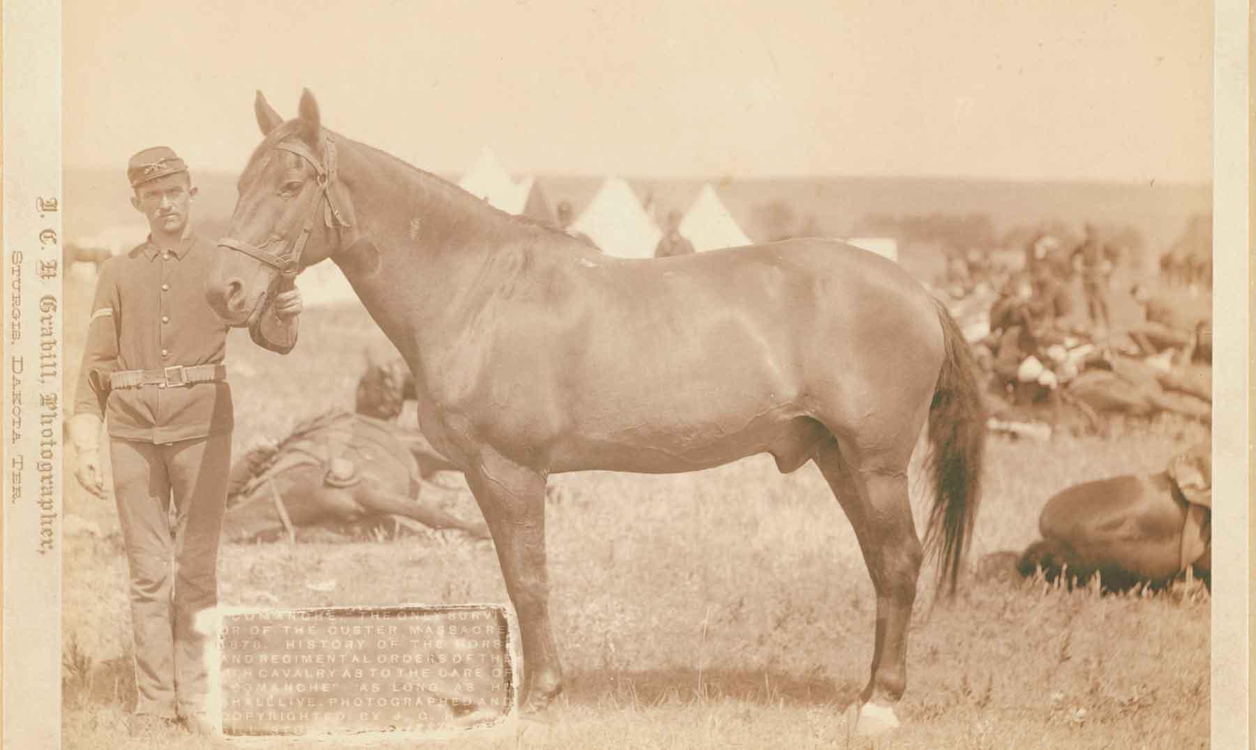 Caballo Comanche