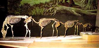 Esqueletos de Caballos