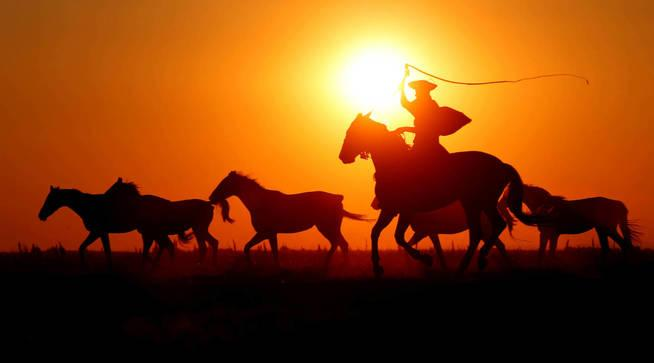Jinete arreando caballos