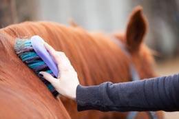 Persona cepillando el caballo