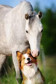 Amistad de perro y caballo