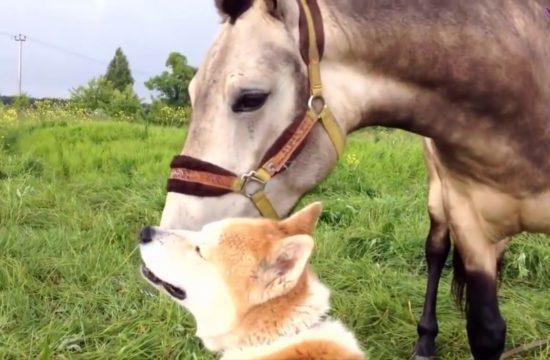 La auténtica amistad de perros y caballos