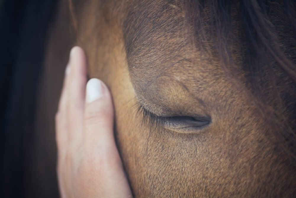 Alergias en los caballos