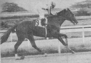 Tropigold El caballo favorito de Gustavo Mirabal