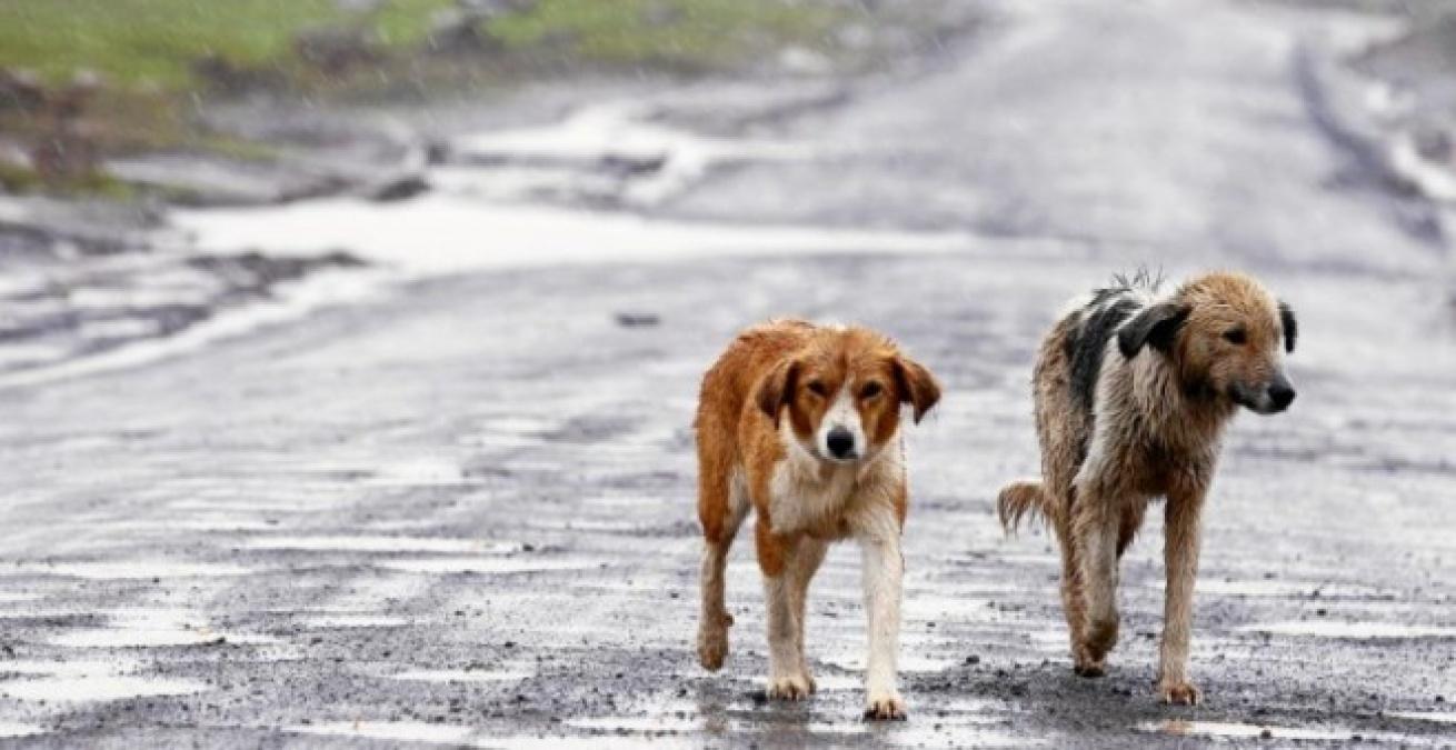 bandono de animales y coronavirus