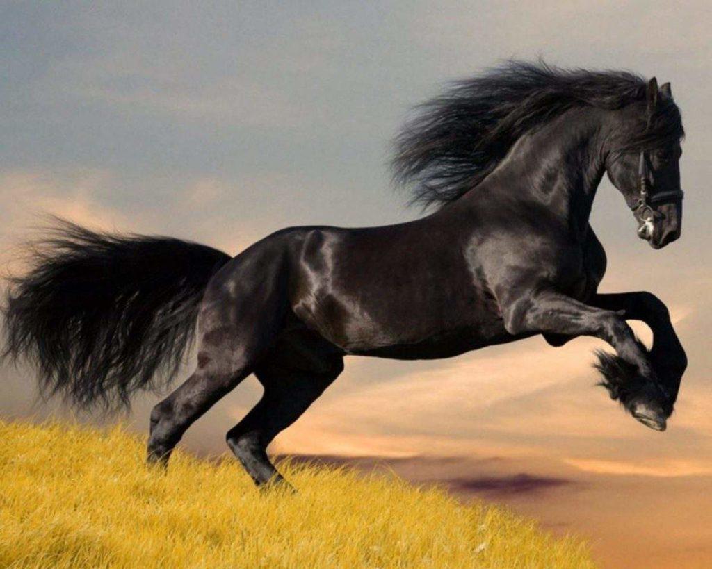 El caballo en la cultura árabe