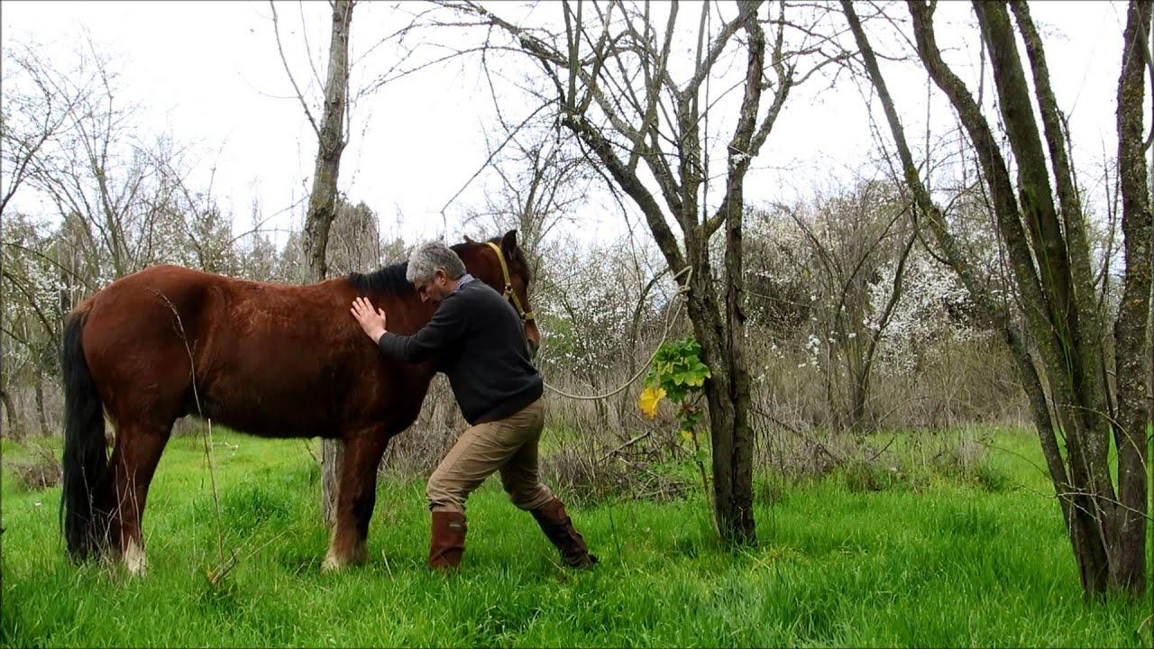 poder sanador del Shiatsu en los equinos