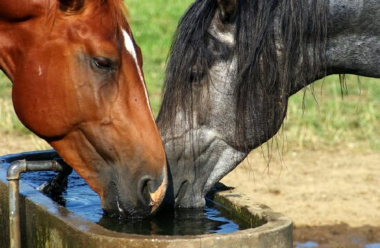 hidratación de los caballos