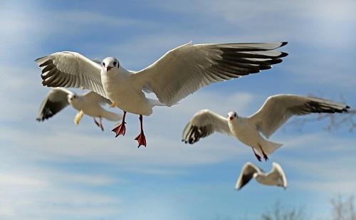 Campaña 2021: ¡Canta, vuela, vuela como un pájaro!